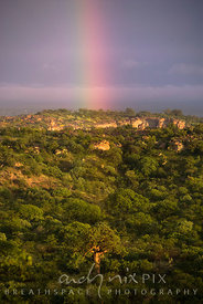 A rainbow ending over a baobab tree standing above surrounding mopane trees