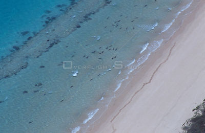 Aerial view of Ningaloo reef, Coral Bay, Western Australia with Black tip reef sharks