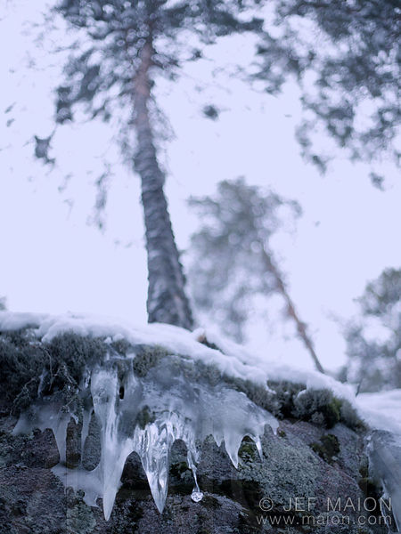 Ice rock and tree