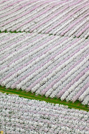 Blooming Almond Orchards from the Air #9
