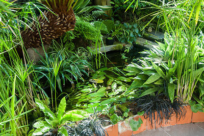 Conservatory built between the house and the rocky outcrop behind it, is home to a range of tender species such as aspidistra...