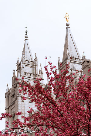Spring at the Temple