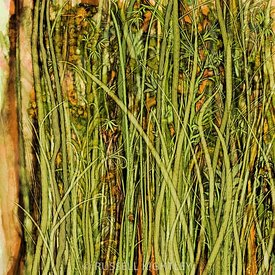 Qualia_s_Grass_(Antique_Yellow)