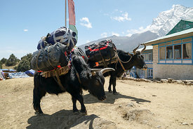 160503-MAMMUT_project360_Everest-0011-Matthias_Taugwalder
