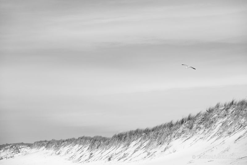 SOUTHAMPTON LONG ISLAND BEACH DUNES SEAGULL BLACK AND WHITE