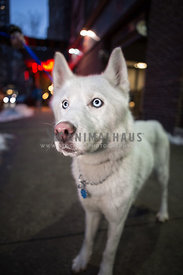 husky blue eyes big nose