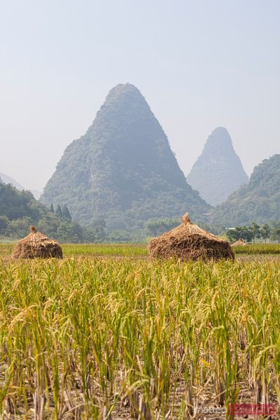 Rice paddies near Yangshuo, Guilin, China