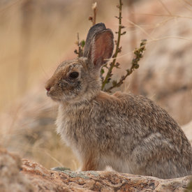 Rabbits and Hares wildlife photos