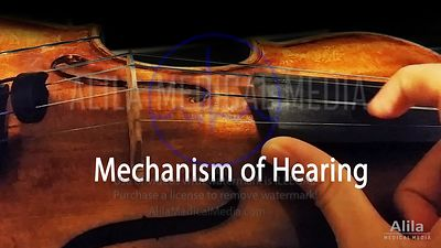 Mechanism of hearing NARRATED animation