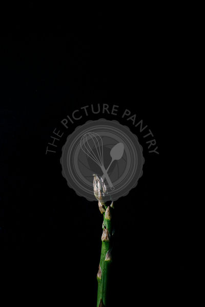 A close up macro photo of an asparagus stalk on a dark background