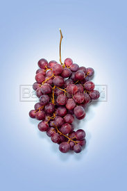 Grapes on Vine
