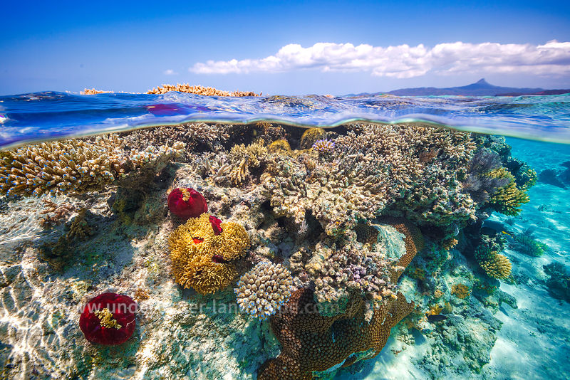 Coral Reef in Mayotte island