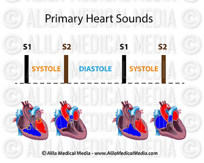 Primary heart sounds