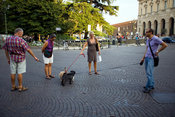 Italy - Verona - Four dog walkers stop and talk as their dogs leads become entwined in the Piazza Bra