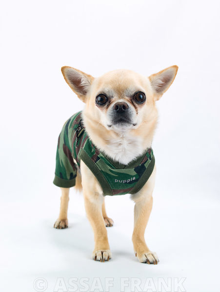 Dog with an army jumper