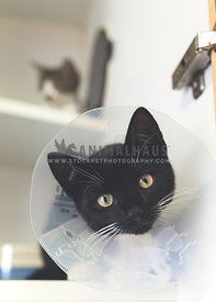 Black kitten with cone of shame on head at animal shelter