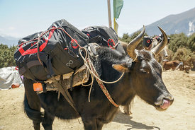 160503-MAMMUT_project360_Everest-0012-Matthias_Taugwalder