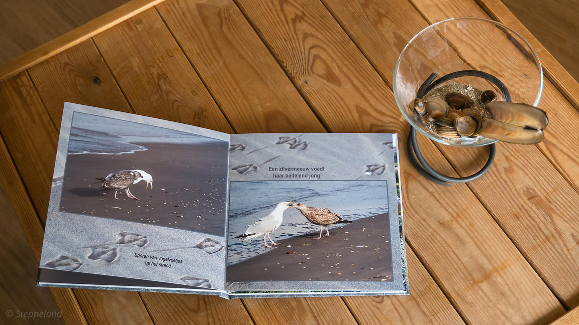 Steppeland photography   Photo book 'Zee, Strand en Duinen