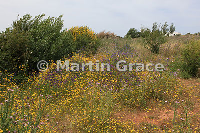 Riot of wild flowers at the Fuente de Piedra Natural Reserve (Reserva Natural), Andalusia, Spain