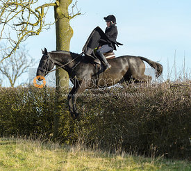 Sophie Walker jumping a hedge near Ladywood - The Cottesmore at Priory Farm