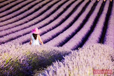 Woman in a lavender field, Provence, France