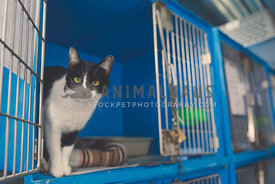 Cat in cat enslosure at the animal shelter with the door open
