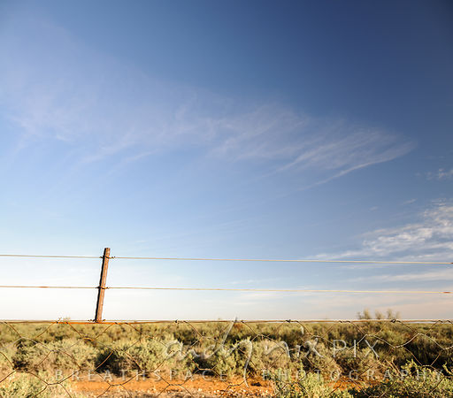 Low-angle view of a barbed wire farm fence with desert bushes behind.