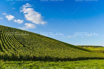 Champagne vineyards in the Cote des Bar, Aube