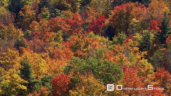 Flying over mixed forest in fall colors