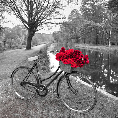 Bicycle with bunch of red roses by the canal