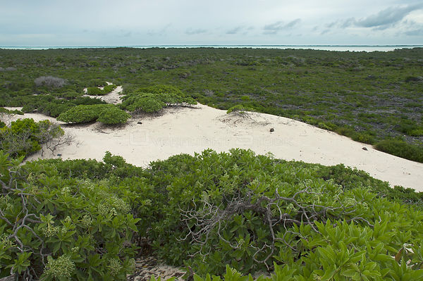 Aldabra Giant Tortoises (Aldabrachelys gigantea) aerial view of the dunes on the south coast of Grand Terre, lagoon in distan...