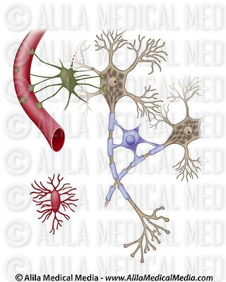 Cells of the Central Nervous System