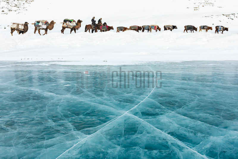 Migrating Herd Passes along the Edge of Black Lake