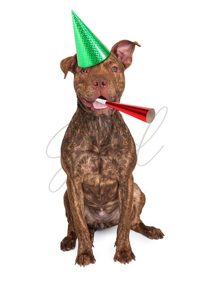 Happy Dog In Party Hat