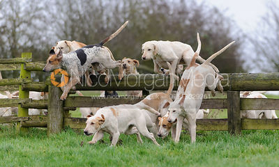 Cottesmore hounds jumping a hunt jump from the meet