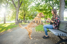 Excited yellow Lab with woman