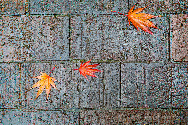 SEATTLE RAIN AUTUMN LEAVES