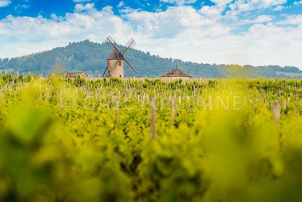 Le Moulin-A-Vent et son vignoble, Beaujolais