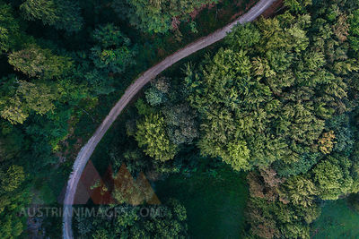 Austria, Lower Austria, Vienna Woods, Biosphere Reserve Vienna Woods, Aerial view of dirt road and forest in the early morning