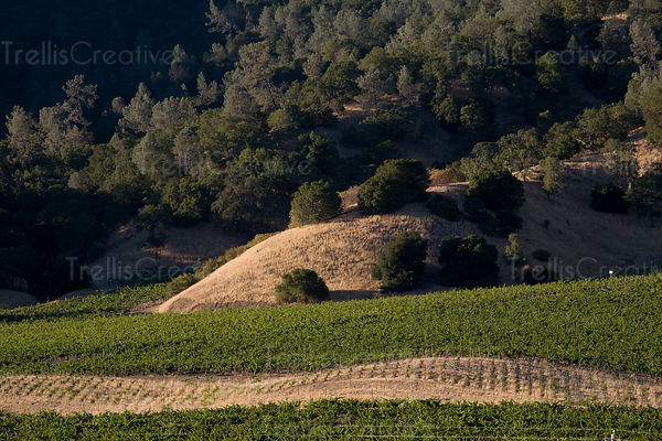 Looking down on a vineyard in Chiles Valley District, California