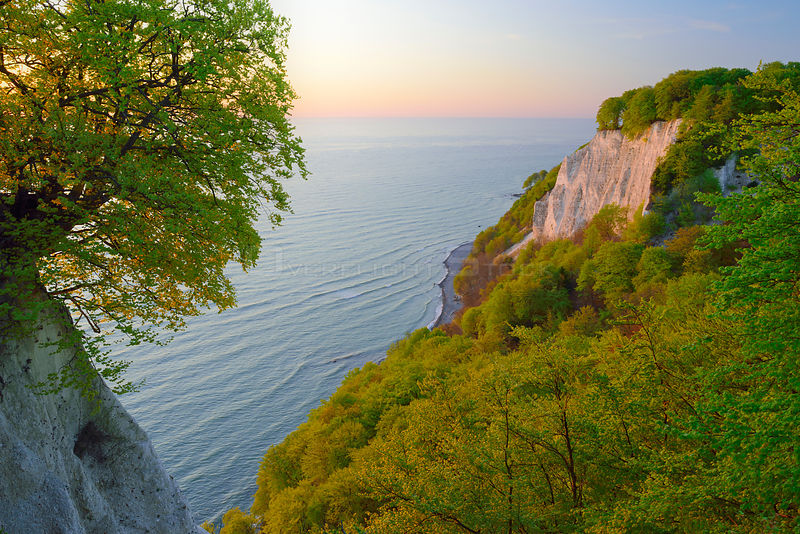 European beech (Fagus sylvatica) on the Baltic Sea with Victoria-lookout from Koenigstuhl. Ruegen, Jasmund National Park, Anc...