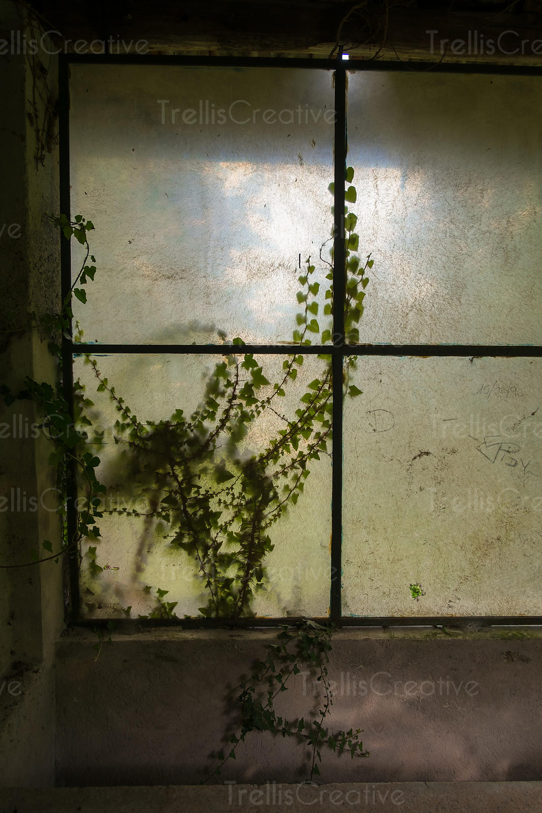 Ivy growing on the window of an abandon house near Varenna, Italy