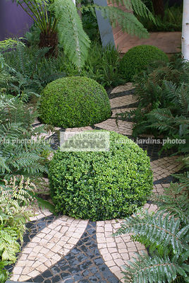 Ball shaped, Buxus, Contemporary garden, Pavement, Sphere shaped, Topiary, Common Box, Digital, Summer