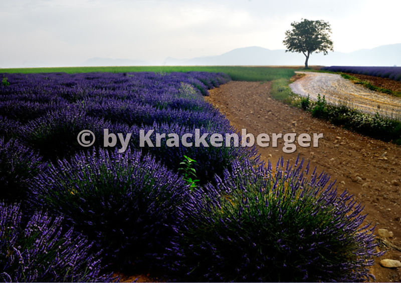 05 Provence