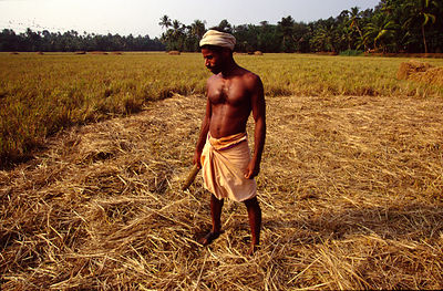 India - Kerala - A labourer in a field