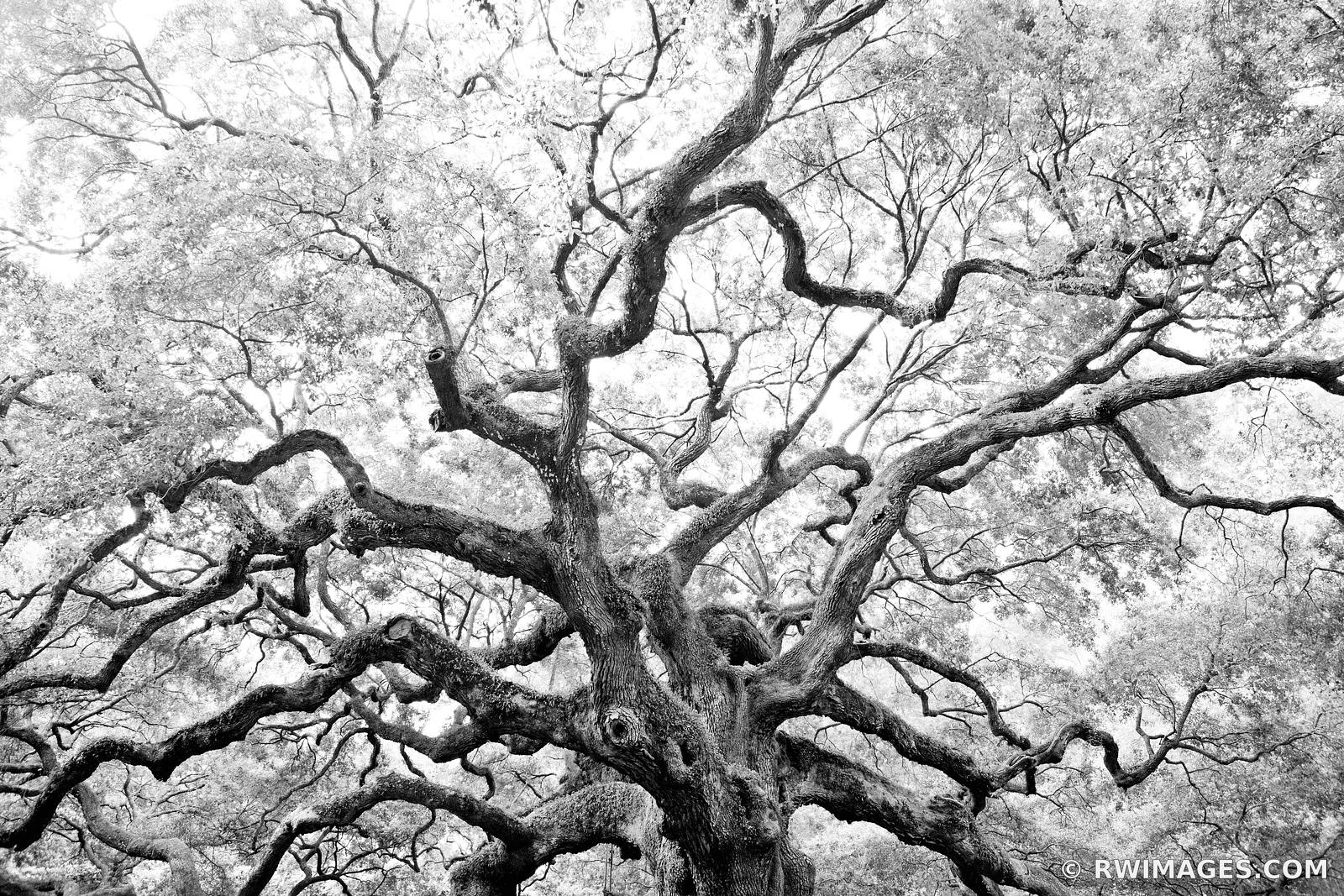 Framed Photo Print of ANGEL OAK TREE JOHNS ISLAND SOUTH