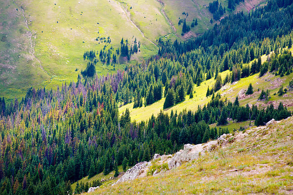 ALPINE FOREST AND HIGH TUNDRA ROCKY MOUNTAIN NATIONAL PARK COLORADO COLOR