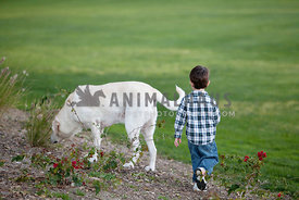 Little-Boy-Walking-With-Dog-at-Park