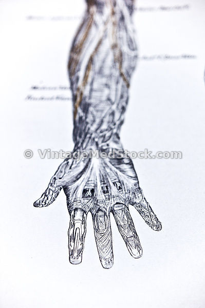 hand_arm_shallow_dof