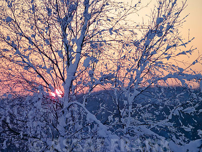 Sunset trough branches covered in snow